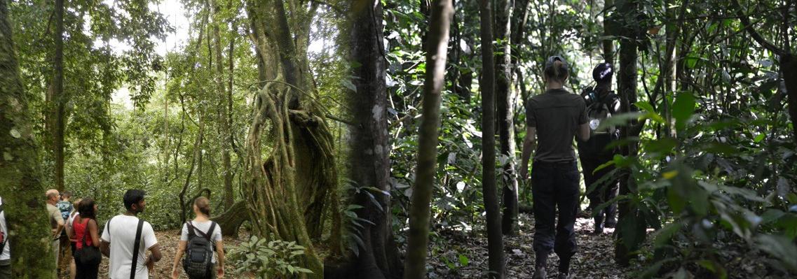 mabira-forest-walk